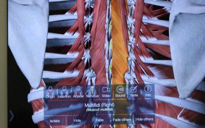 多裂筋と胸腸骨筋